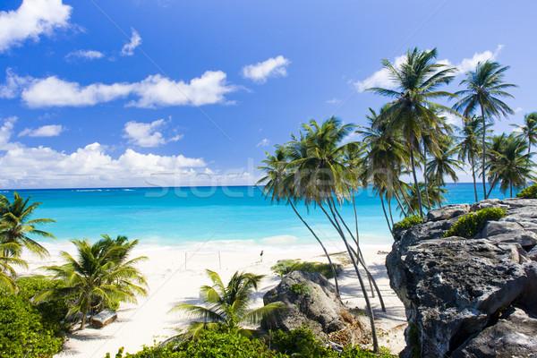 Stock fotó: Fenék · Barbados · Karib · fa · tájkép · tenger