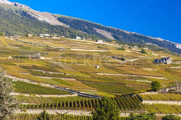 регион Швейцария пейзаж путешествия гор завода Сток-фото © phbcz