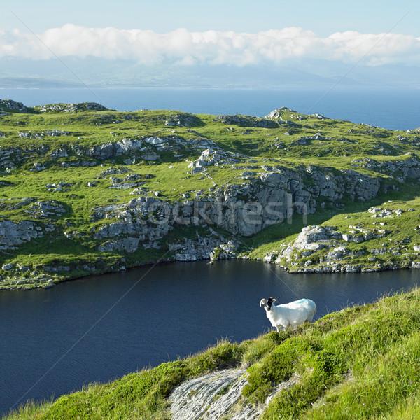頭 半島 コルク アイルランド 緑 旅行 ストックフォト © phbcz