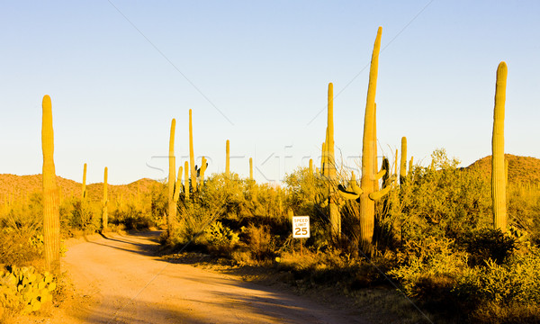Park Arizona ABD manzara çöl kaktüs Stok fotoğraf © phbcz