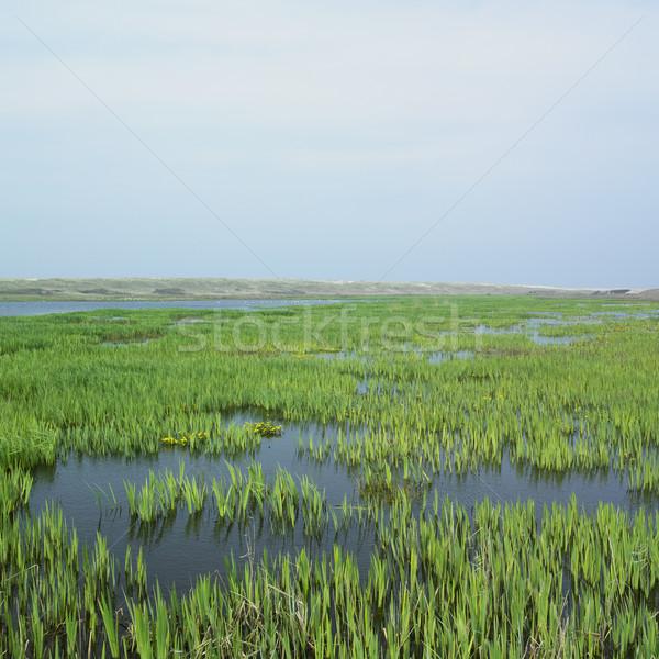 Texel Island, Netherlands Stock photo © phbcz