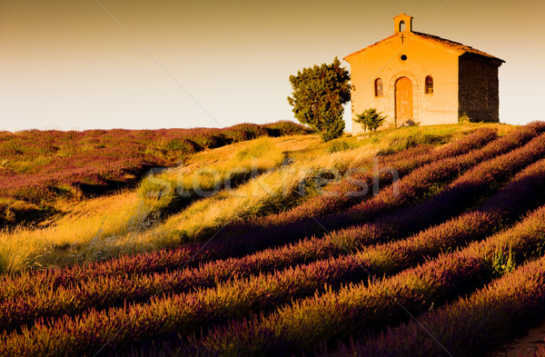 chapel with lavender field, Plateau de Valensole, Provence, France Stock photo © phbcz