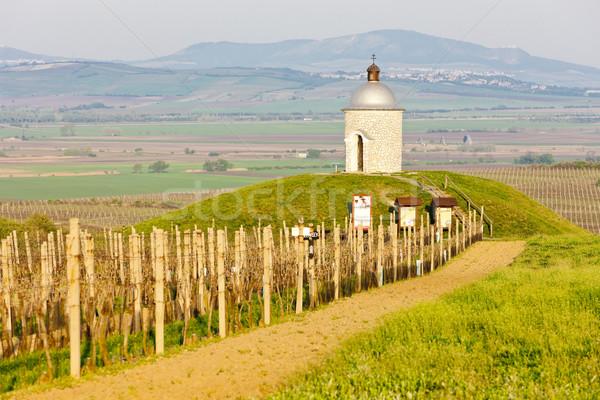 Kaplica winnicy Czechy architektury Europie rolnictwa Zdjęcia stock © phbcz
