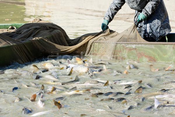 Aratás tavacska férfi munka férfiak halászat Stock fotó © phbcz