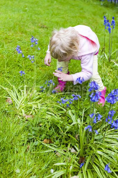 little girl wearing rubber boots in garden Stock photo © phbcz