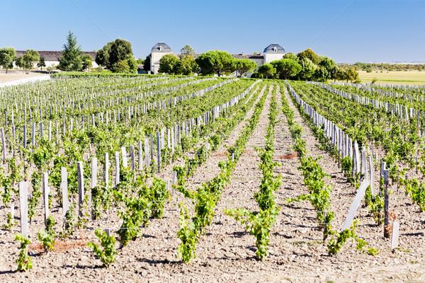 vineyard and Chateau Calon-Segur, Saint-Estephe, Bordeaux Region Stock photo © phbcz
