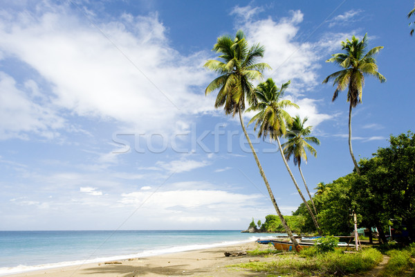 Barbados, Caribbean Stock photo © phbcz