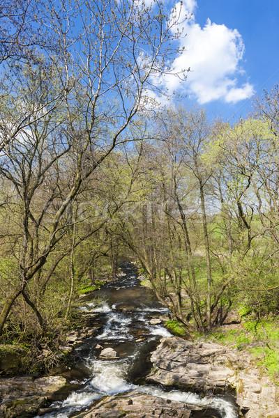 spring landscape with Vyrovka brook, Czech Republic Stock photo © phbcz