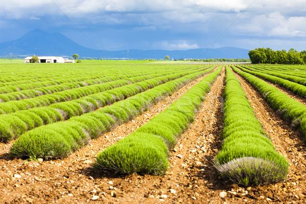плато Франция весны пейзаж путешествия Сток-фото © phbcz