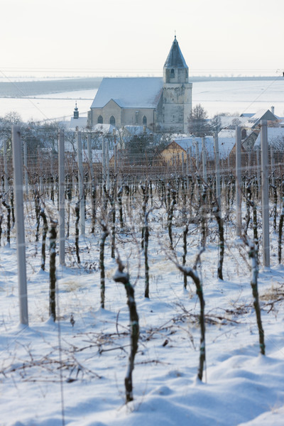 Hnanice with winter vineyard, Czech Republic Stock photo © phbcz