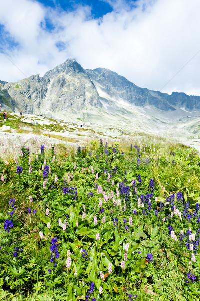 Stock photo: Small Cold Valley, Vysoke Tatry (High Tatras), Slovakia