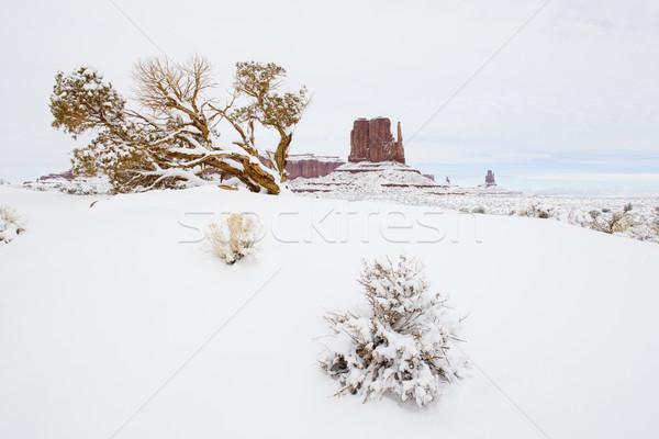 Valle parco USA panorama neve inverno Foto d'archivio © phbcz