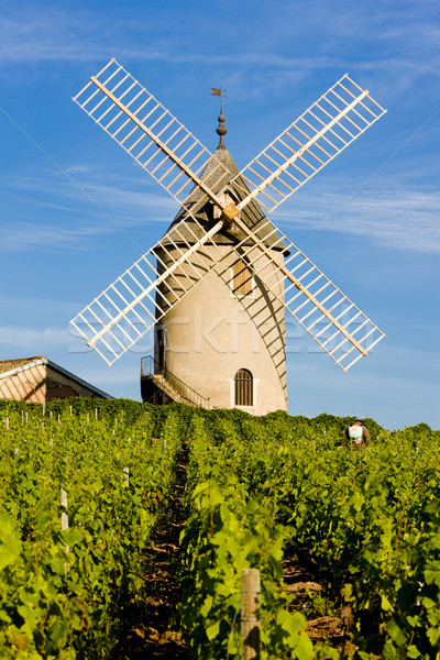 vineyards with windmill near Ch Stock photo © phbcz