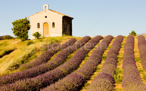 Kapel lavendel veld plateau bloem gebouw veld Stockfoto © phbcz