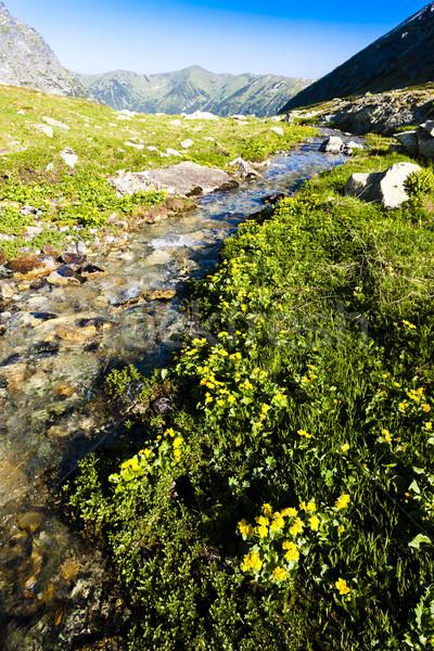 Vale alto Eslováquia flor paisagem europa Foto stock © phbcz
