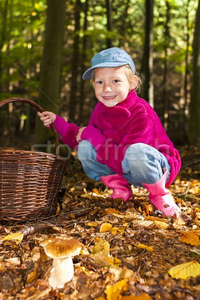 mushroom picking little girl in forest Stock photo © phbcz