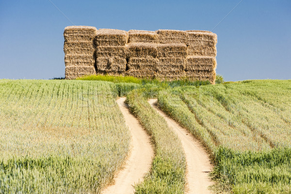 straw bales, Czech Republic Stock photo © phbcz