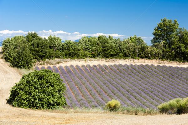 Photo stock: Champ · de · lavande · plateau · France · fleur · nature · agriculture