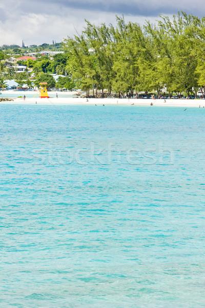 Przedsiębiorstwo plaży Barbados Karaibów morza drzew Zdjęcia stock © phbcz