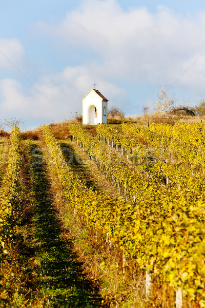 vineyard in autumn near Hnanice, Czech Republic Stock photo © phbcz