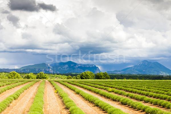 Foto stock: Campo · de · lavanda · planalto · França · paisagem · europa · lavanda