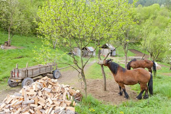 countryside of Bosnia and Hercegovina Stock photo © phbcz