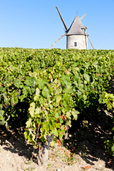 vineyard with windmill near Blaignan, Bordeaux Region, France Stock photo © phbcz