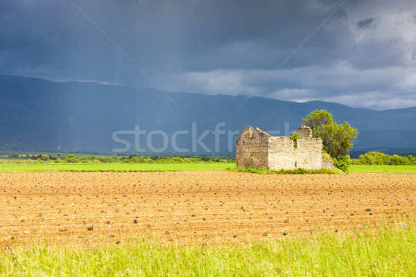 field with a ruin of house and tree, Plateau de Valensole, Prove Stock photo © phbcz