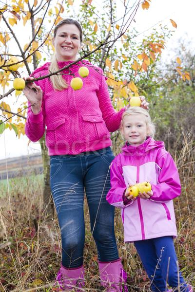 Anya lánygyermek őszi almafa tart almák Stock fotó © phbcz