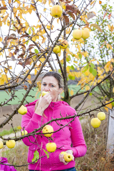 woman with autumnal apple tree eating an apple Stock photo © phbcz