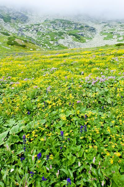 Kvetnica, Vysoke Tatry (High Tatras), Slovakia Stock photo © phbcz