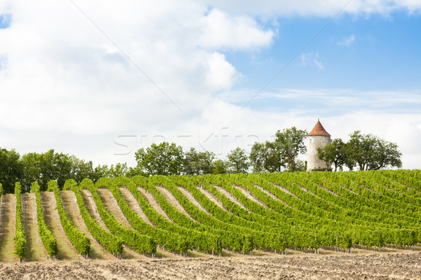 vineyard with windmill near Ribagnac, Dordogne Department, Aquit Stock photo © phbcz