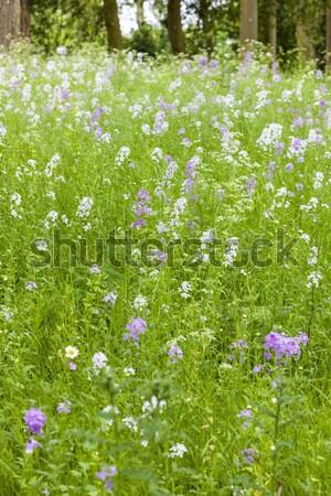çiçek çayır çim doğa arka plan yaz Stok fotoğraf © phbcz