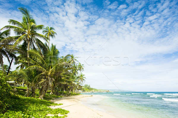 Martin''s Bay, Barbados, Caribbean Stock photo © phbcz