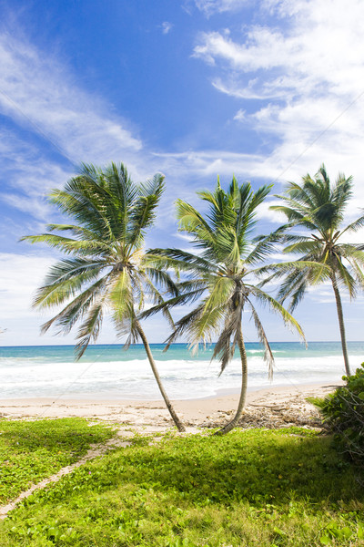 Green Point, Eastern coast of Barbados, Caribbean Stock photo © phbcz