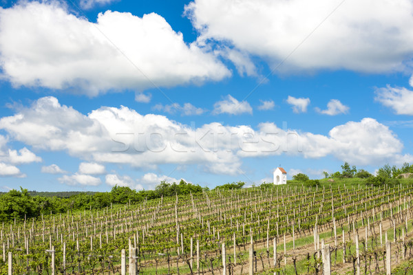 Stock photo: spring vineyard near Hnanice, Southern Moravia, Czech Republic