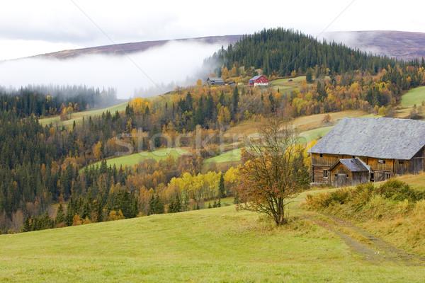 Bölge park Norveç orman sonbahar manzara Stok fotoğraf © phbcz