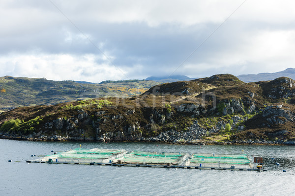 salmon farm, Loch a Chairn Bhain, Highlands, Scotland Stock photo © phbcz