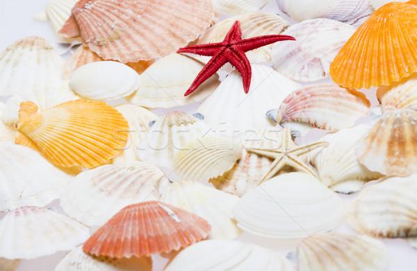 Kagylók tengeri csillag hátterek tárgyak kagylók bent Stock fotó © phbcz