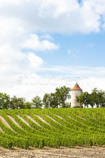 Wijngaard windmolen afdeling architectuur Europa wijnstok Stockfoto © phbcz