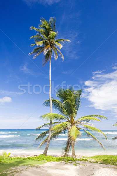 Bathsheba, Eastern coast of Barbados, Caribbean Stock photo © phbcz