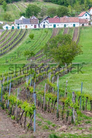 Small Fortress Theresienstadt with cemetery, Terezin, Czech Repu Stock photo © phbcz