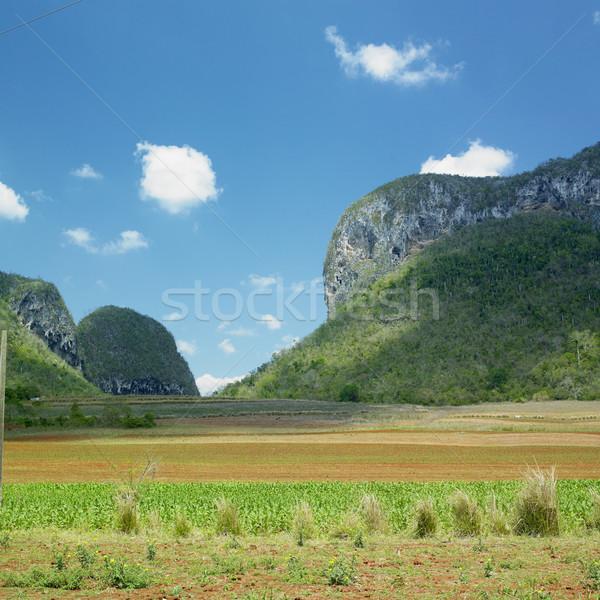 Valle Río Cuba paisaje campo viaje Foto stock © phbcz