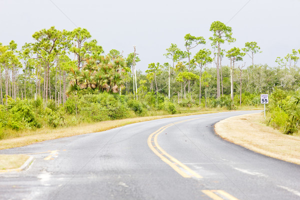 road in Everglades National Park, Florida, USA Stock photo © phbcz