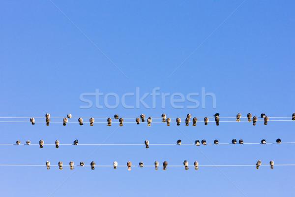 Kuşlar oturma tel Nevada ABD Stok fotoğraf © phbcz