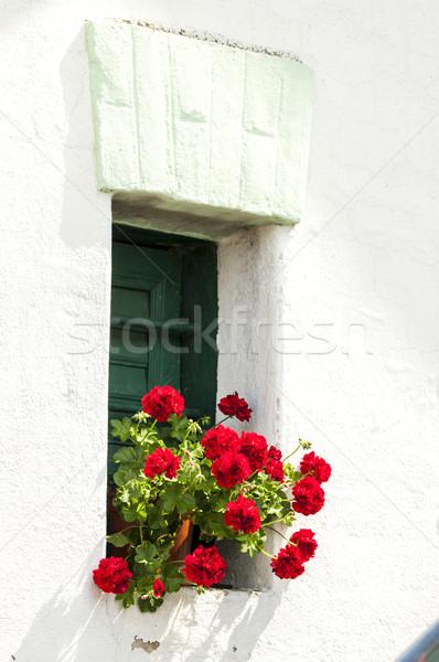 window with geranium Stock photo © phbcz