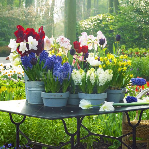 Tuinen Nederland bloem natuur park planten Stockfoto © phbcz
