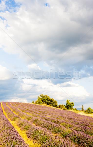 Campo de lavanda planalto França flor viajar plantas Foto stock © phbcz