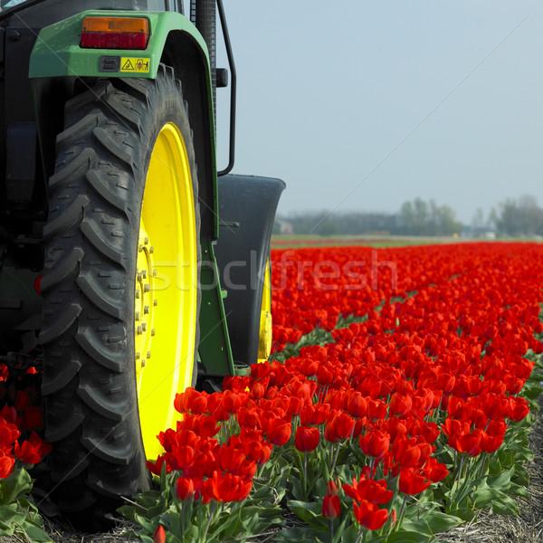 Traktör lâle alan Hollanda çiçekler bitkiler Stok fotoğraf © phbcz