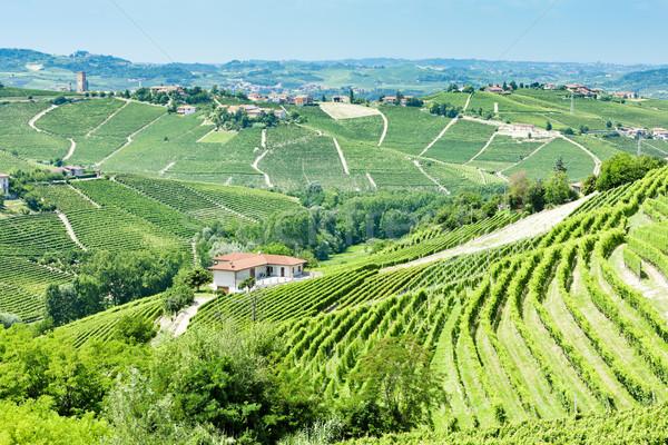 Stockfoto: Italië · natuur · land · wijnstok · natuurlijke · buitenshuis